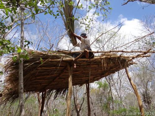 Techado de palma huano (Sabal spp.)